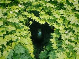 ゴーヤのトンネル