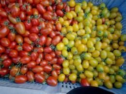 朝採れミニトマト