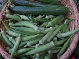 朝6時前までに畑に行かないと、買えないのです。農家の人は朝早い。オクラが大好きでさっと塩ゆでして、細かく切って、1回分ずつ冷凍します。納豆にあえて朝食に。