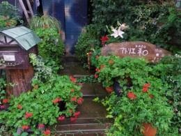 玄関アプローチ。綺麗なガーデニングより雑草とぐちゃぐちゃのほうが好きです。