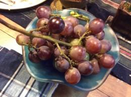 お庭で、収穫した葡萄