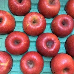私は、真っ赤なりんごです!