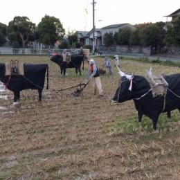 牛でーす。もー!