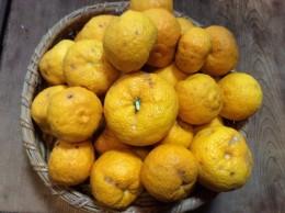 柚子50個