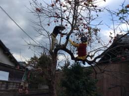 柿の木に登っている案山子