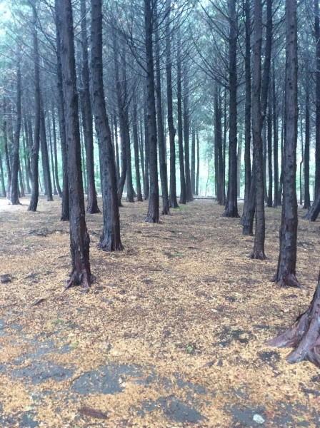 雨の後の森は空気が美味しいよ!