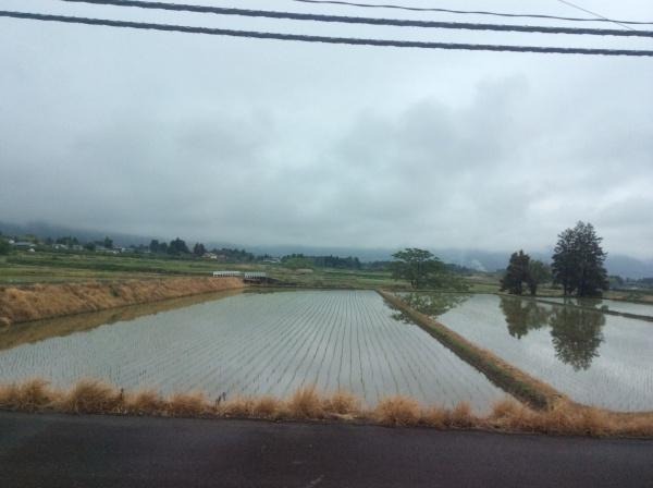 田植えが終わった田んぼ。