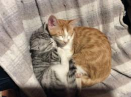 12月猫2匹の里親に。