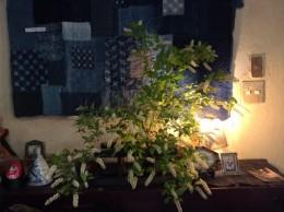 庭の令法リョウブを生けました。 茶花に生けられますが、枝ぶりが良く大好きな花。