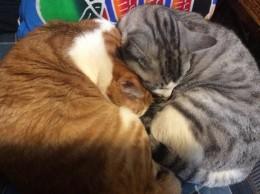 こういう日は、猫も寝ています。
