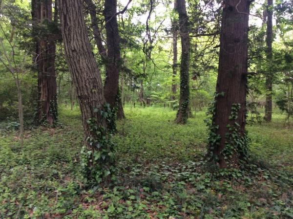 広尾個展が終わり、1週間ぶりに来たら森はすっかり新緑でした。