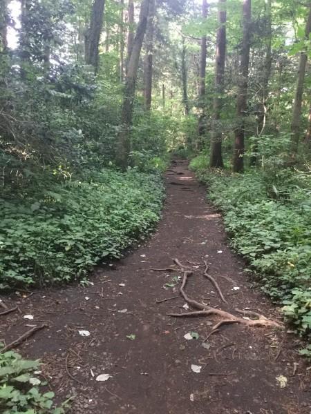 今日も暑くなりそう。 早朝の森散歩で、体力をつけよう‼️