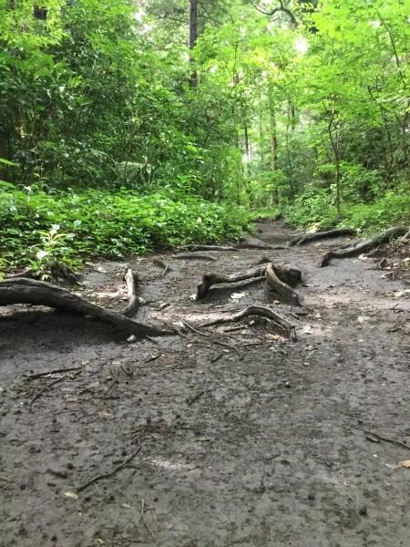 昨日の雨に洗われて、森がしっとり。