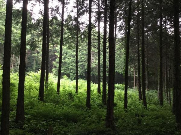 朝、静寂な森。