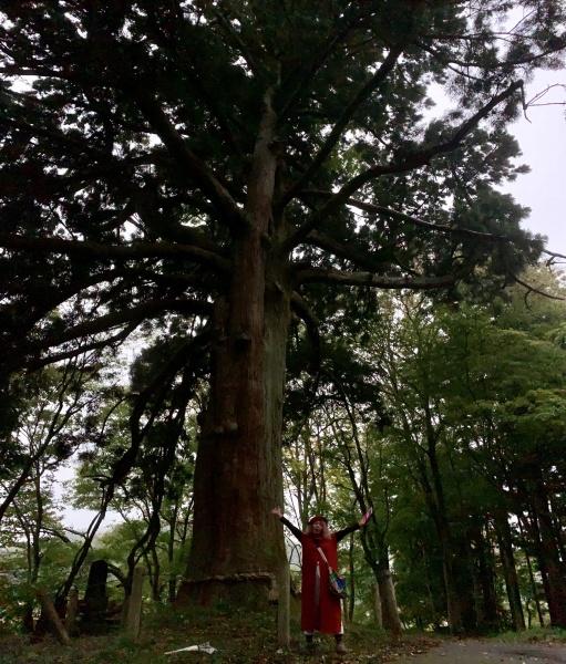 樹齢800年の、従二位の杉。 兎に角大きい。 よくこんな長い時代を、生き抜いて来たもんだ。