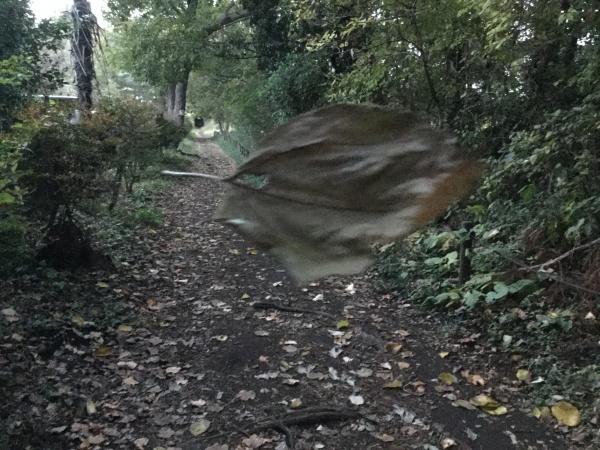 一枚の葉っぱが、蜘蛛の糸に引っかかって、空中をヒラヒラ。
