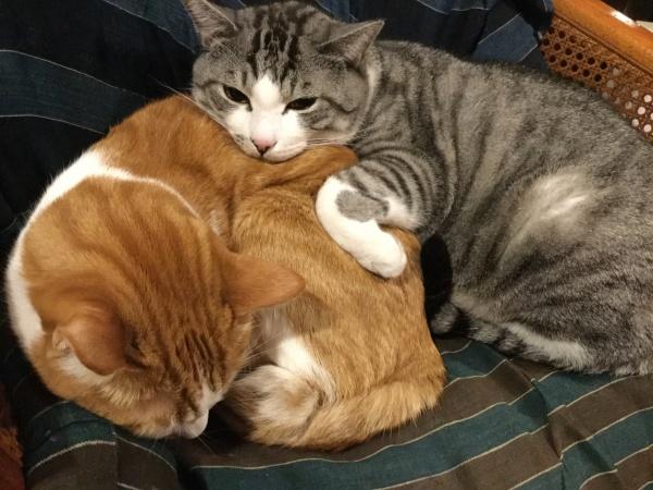 保護猫。2匹は兄弟ではありませんが、何時もこうしてくっついています。