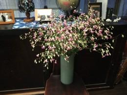 ピンクのカスミソウ。これも1束200円