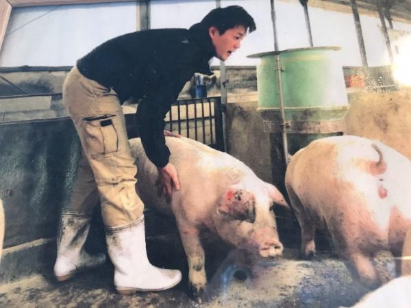 厚木豚。臼井畜産