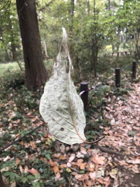 蜘蛛の糸に引っかかた枯葉